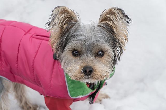 pes v zimě
