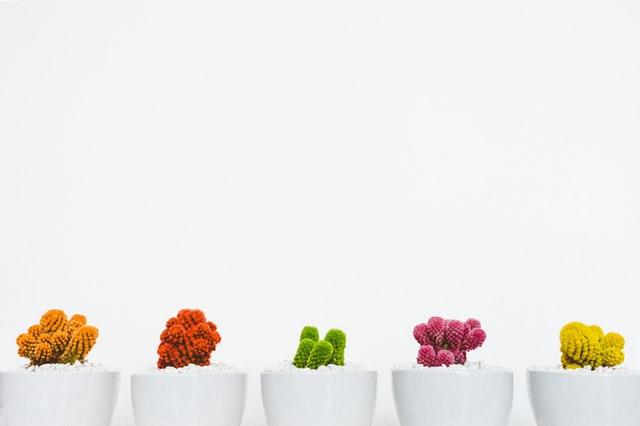 Biele kvetináče s farebnými mini kaktusmi